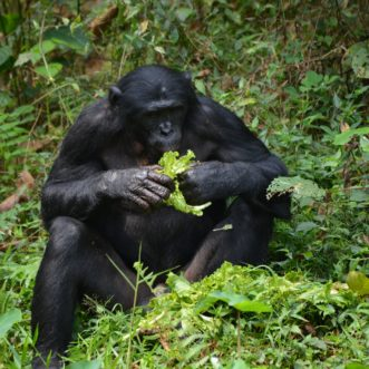 Your Guide to Better Decision-Making Based on Evolutionary Biology – Part I